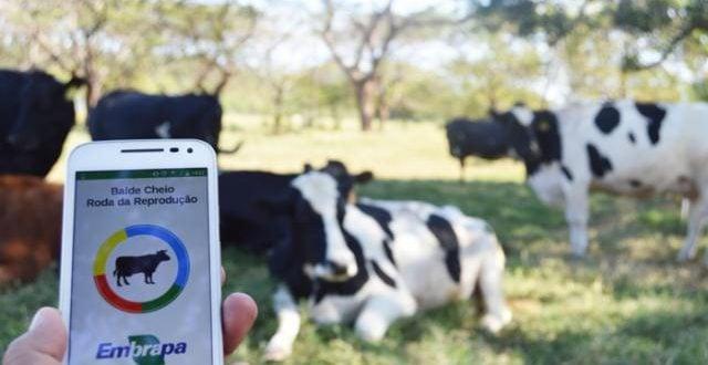 Roda da reprodução agora no celular - Foto: Giselle Rosso