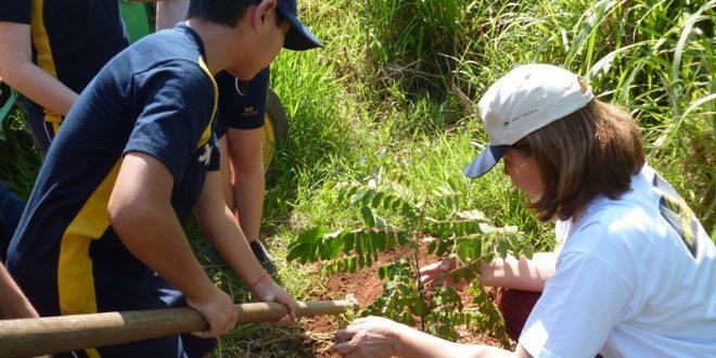 plantando-arvore